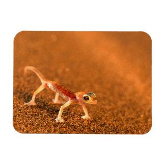 Palmatogecko On Sand Dune, Swakpomund, Erongo Rectangular Photo Magnet