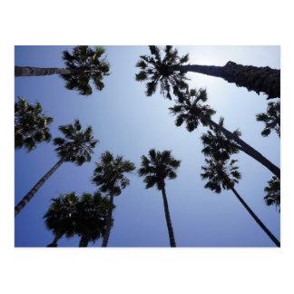 Palmera California Santa Barbara Tarjeta Postal