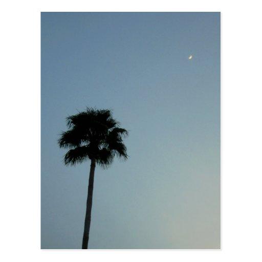 Palmera contra el cielo postal