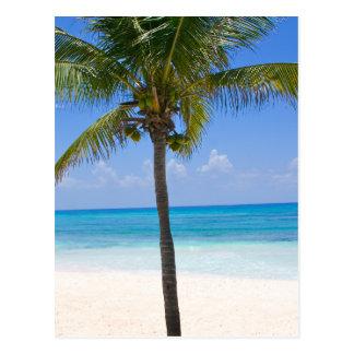 Palmera de Bahamas Tarjetas Postales