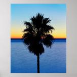 Palmera de California y puesta del sol del Océano  Posters