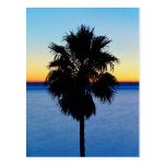 Palmera de California y puesta del sol del Océano  Tarjetas Postales