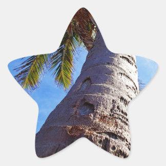 Palmera de la Florida Pegatina En Forma De Estrella