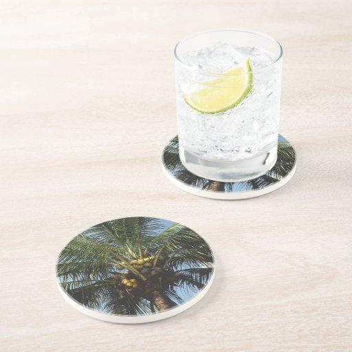 Palmera del coco posavaso para bebida