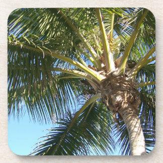 Palmera del coco posavasos