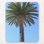 Palmera en San Diego, CA Alfombrillas De Ratón