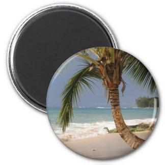 palmera exótica en la playa imán de frigorífico