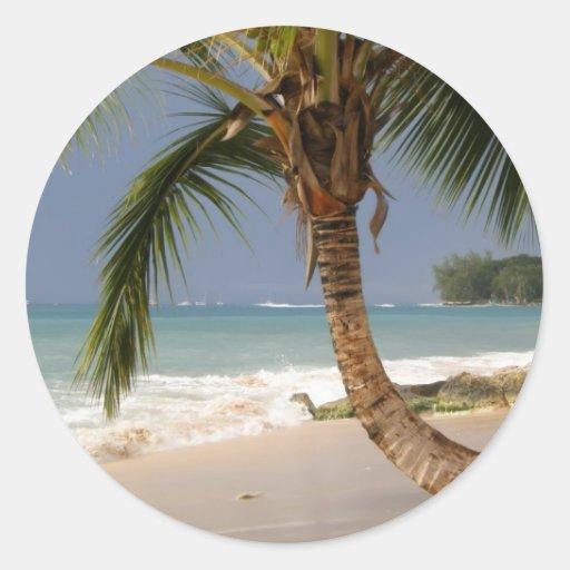 palmera exótica en la playa pegatina