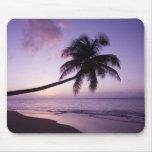 Palmera solitaria en la puesta del sol, playa 2 de tapetes de raton