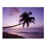 Palmera solitaria en la puesta del sol, playa 2 de tarjetas postales