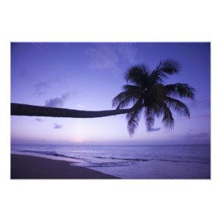 Palmera solitaria en la puesta del sol, playa 3 de arte con fotos