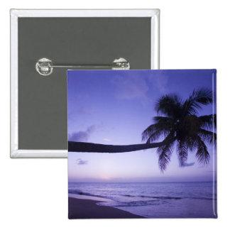Palmera solitaria en la puesta del sol, playa 3 de pin cuadrado