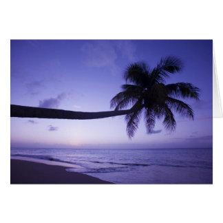 Palmera solitaria en la puesta del sol, playa 3 de tarjeta de felicitación