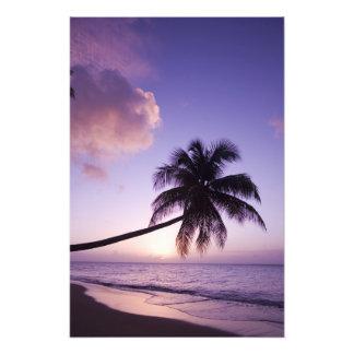 Palmera solitaria en la puesta del sol, playa de l fotografías