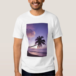 Palmera solitaria en la puesta del sol, playa de playeras