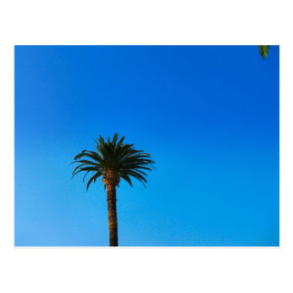 palmera tarjetas postales