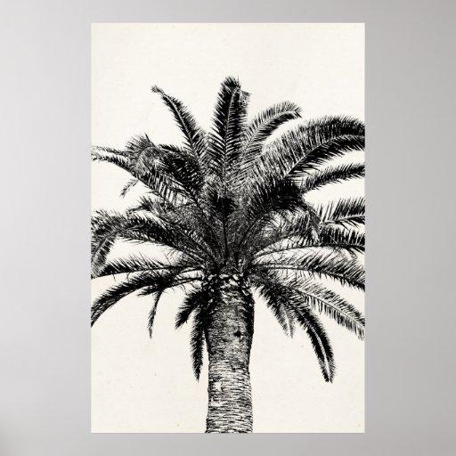 Palmera tropical retra de la isla en blanco y negr posters