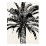 Palmera tropical retra de la isla en blanco y negr tarjeta postal