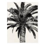 Palmera tropical retra de la isla en blanco y tarjeta postal