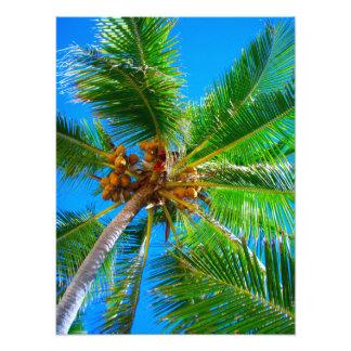 Palmera Vanuatu del coco de la foto el |