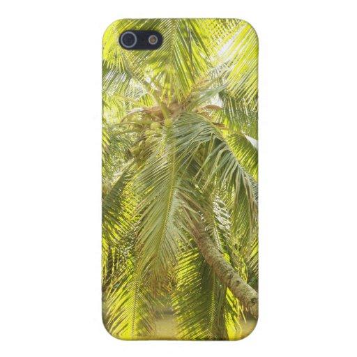 Palmera verde en caso del iPhone del agua iPhone 5 Cárcasa