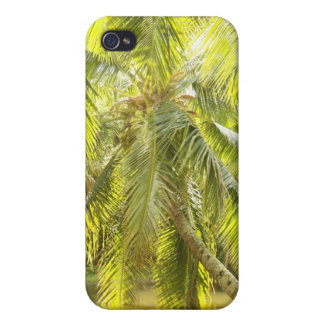 Palmera verde en caso del iPhone del agua iPhone 4/4S Funda