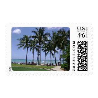 Palmeras a montones en la playa de Waikiki y la pl