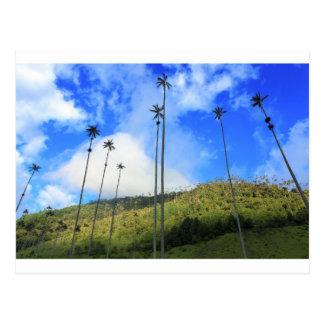 Palmeras colombianas de la cera en el valle de Coc Tarjeta Postal