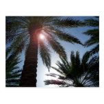 Palmeras de la Florida en la postal de Sun