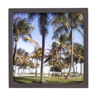 Palmeras de Miami Cajas De Regalo De Calidad