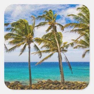 Palmeras del coco (nucifera de los Cocos) que se Calcomanías Cuadradas