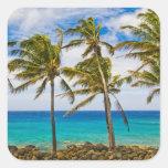 Palmeras del coco (nucifera de los Cocos) que se Pegatina Cuadrada