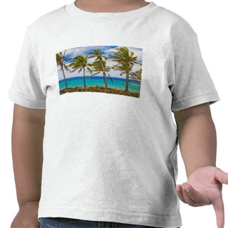 Palmeras del coco (nucifera de los Cocos) que se Camiseta