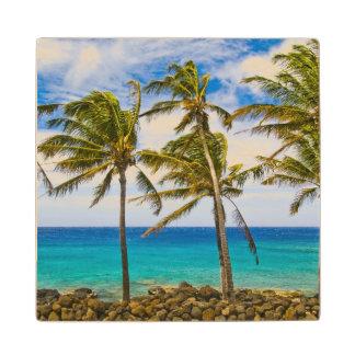 Palmeras del coco (nucifera de los Cocos) que se Posavasos De Madera