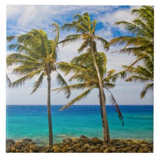 Palmeras del coco (nucifera de los Cocos) que se s Azulejo Cuadrado Grande