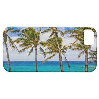 Palmeras del coco (nucifera de los Cocos) que se s iPhone 5 Protector