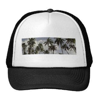 Palmeras dominicanas gorras de camionero