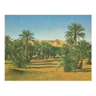 Palmeras, EL Adjal, Libia del lecho de un río seco Postal