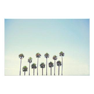 Palmeras en California Cojinete