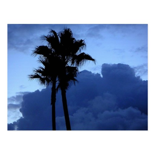Palmeras en el cielo azul tarjeta postal