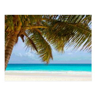 Palmeras en el mar y el cielo azules de la playa tarjetas postales