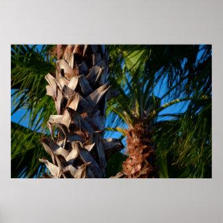 palmeras en la Florida Poster