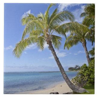Palmeras en la playa en Hawaii Tejas