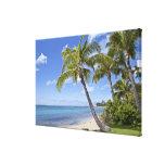 Palmeras en la playa en Hawaii Lona Envuelta Para Galerías