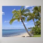 Palmeras en la playa en Hawaii Póster