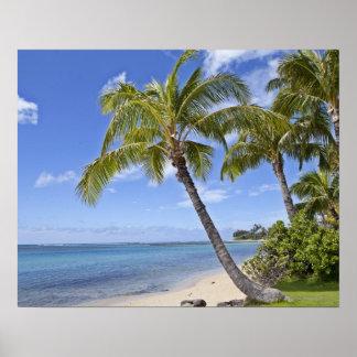 Palmeras en la playa en Hawaii Posters