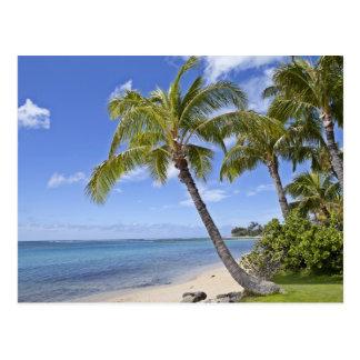 Palmeras en la playa en Hawaii Tarjetas Postales