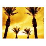 Palmeras en postal de la puesta del sol