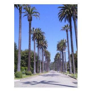 Palmeras en una calle en Los Ángeles Postales