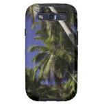 Palmeras en una isla tropical del Caribe Galaxy S3 Cobertura